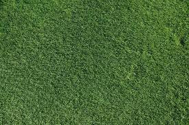 Bermuda Grass Austin
